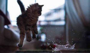 Cómo bañar a un gato paso a paso