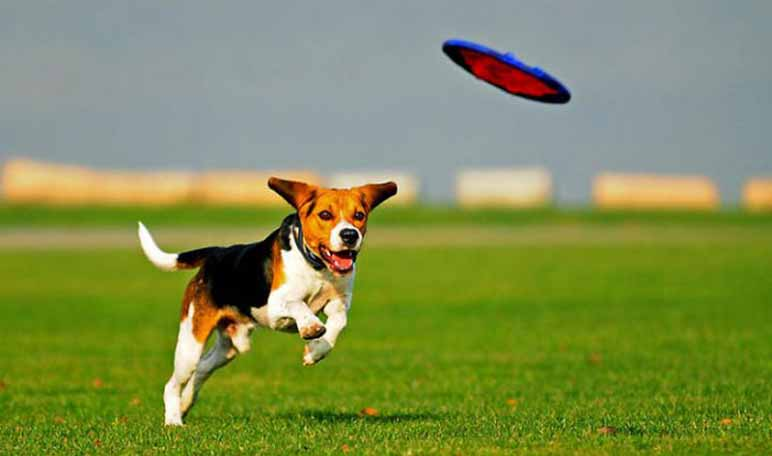 Ejercicios para perros hiperactivos - Apréndete