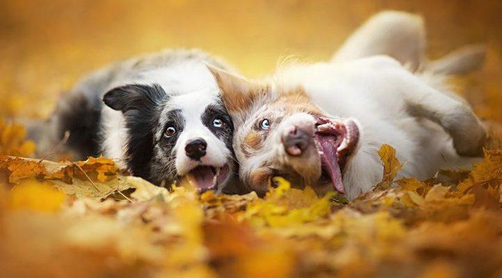 un-nuevo-perro-en-casa-como-evitar-las-envidias-4