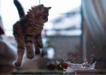 como-banar-a-un-gato