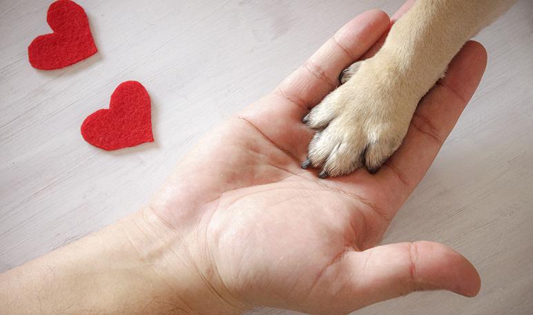 Por qué adoptar una mascota en vez de comprarla - Apréndete