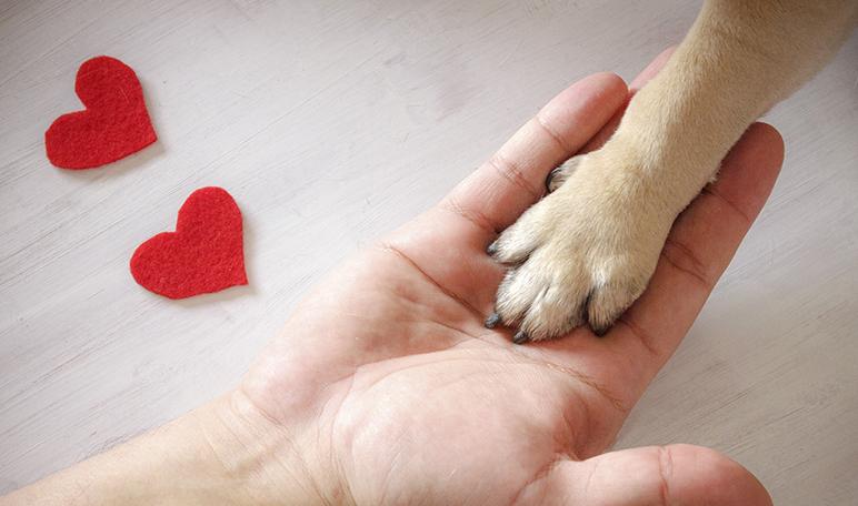 Los 11 nombres de perras más usados y su significado - Apréndete