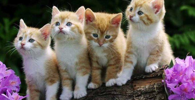 14 nombres para gatas y su significado