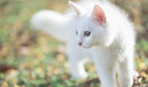 Aprende el significado de 14 nombres para gatos - Apréndete