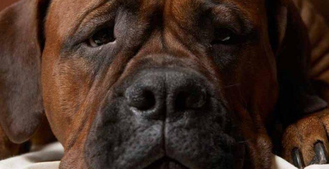 ¿Por qué las mascotas se deprimen?