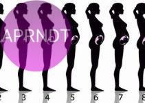 Te contamos el progreso del embarazo mes a mes