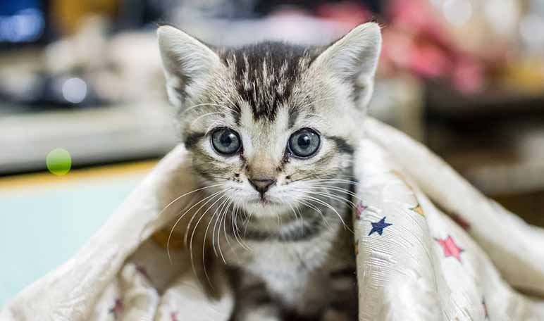 7 beneficios de tener un gato en casa