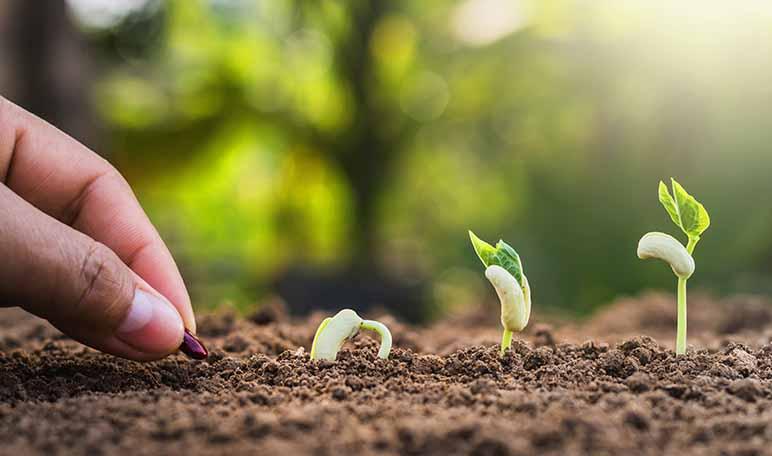Los imprescindibles para el jardín - Apréndete