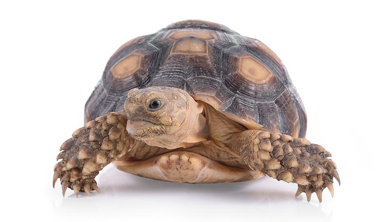 10 curiosidades sobre los animales exóticos que quizás no conoces - Apréndete