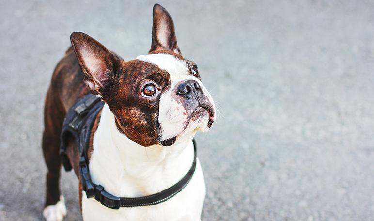 Orijen senior, un pienso para perros mayores ideal para mascotas de avanzada edad - Apréndete